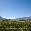 Grande Provence Harvest Festival 2012 #6922