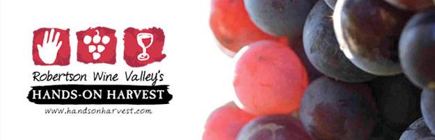 Robertson Wine Valley's Hands on Harvest