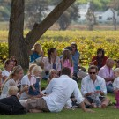 Constantia Food and Wine Festival an event for the whole family