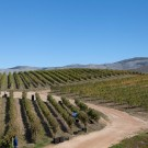 Creation Wines at Hemel-en-Aarde Ridge near the coastal resort Hermanus